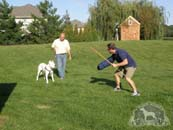 Dr. Antonio Nores Martinez with a Dogo Argentino and a trainer