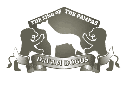 Dream Dogos - Dogo Argentino Breeder - Puppies for sale